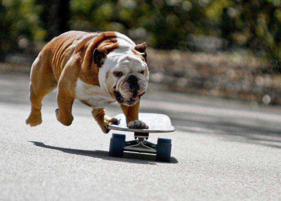 Смешные картинки про спорт животные, для