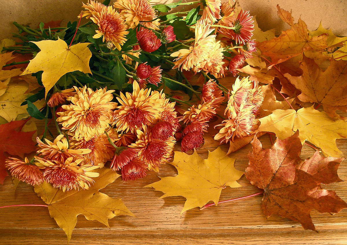 Днем, открытки с осенним букетом из листьев