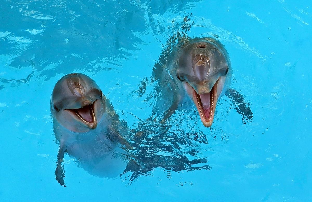 Прикольный картинки с дельфинами