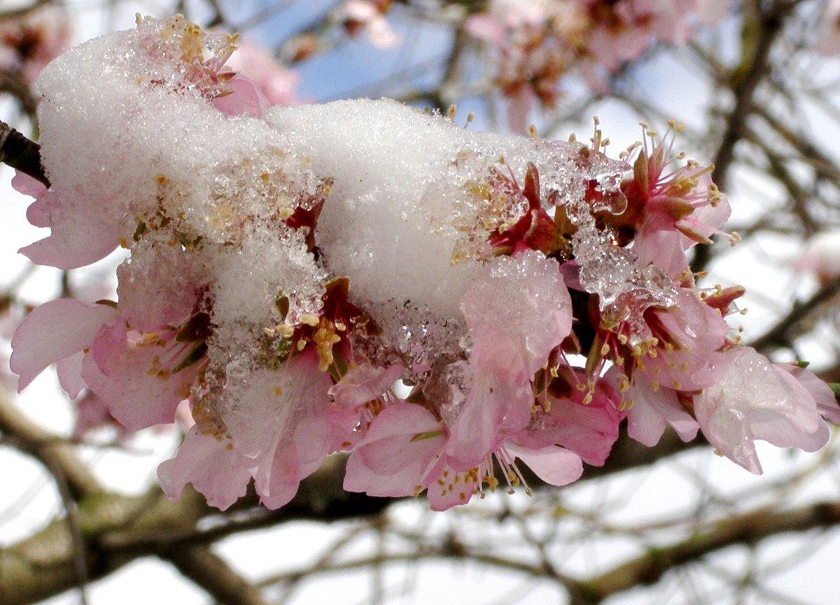 Весна февраль картинки