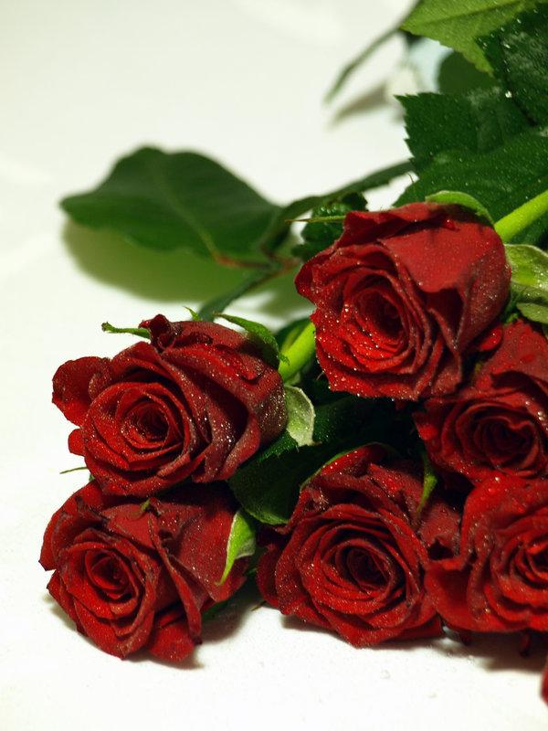 Картинка семь алых роз