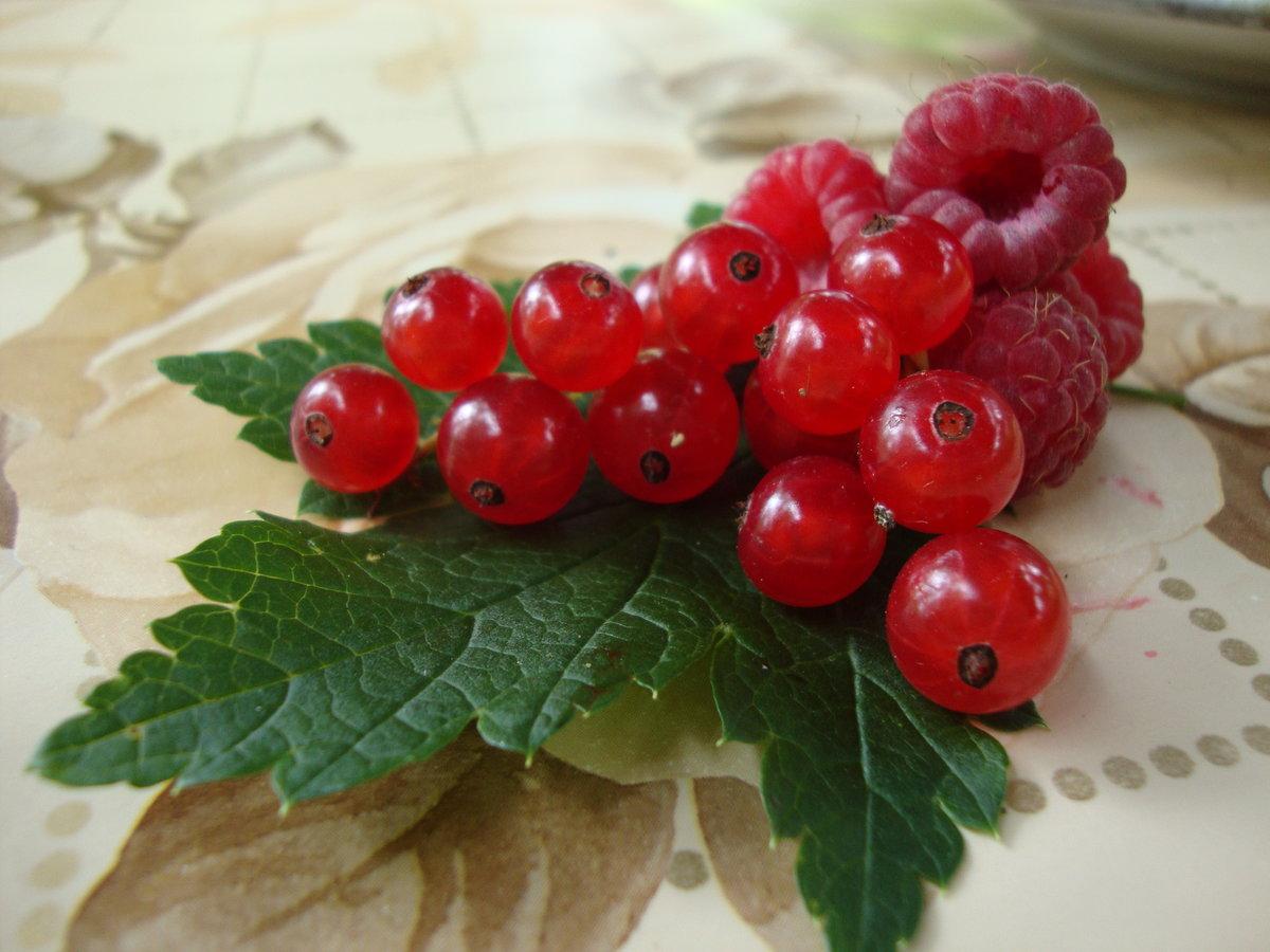 картинки малина и красная смородина считаются