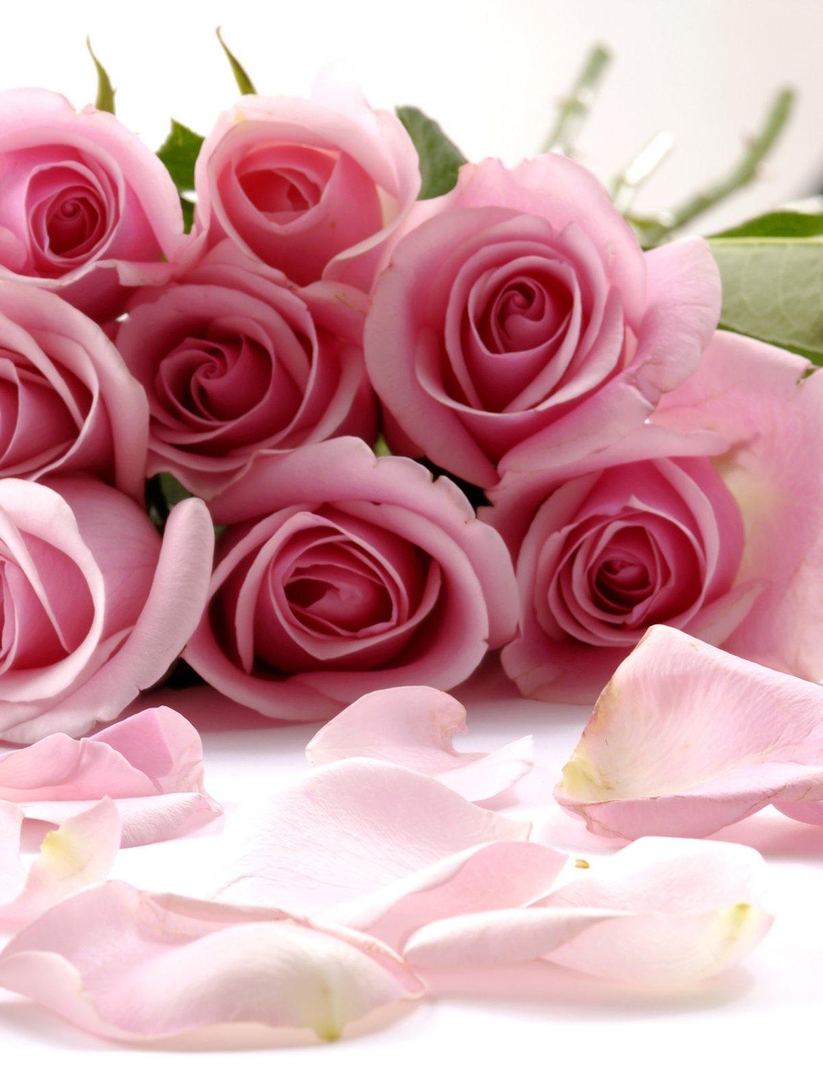 Картинки на телефон-цветы