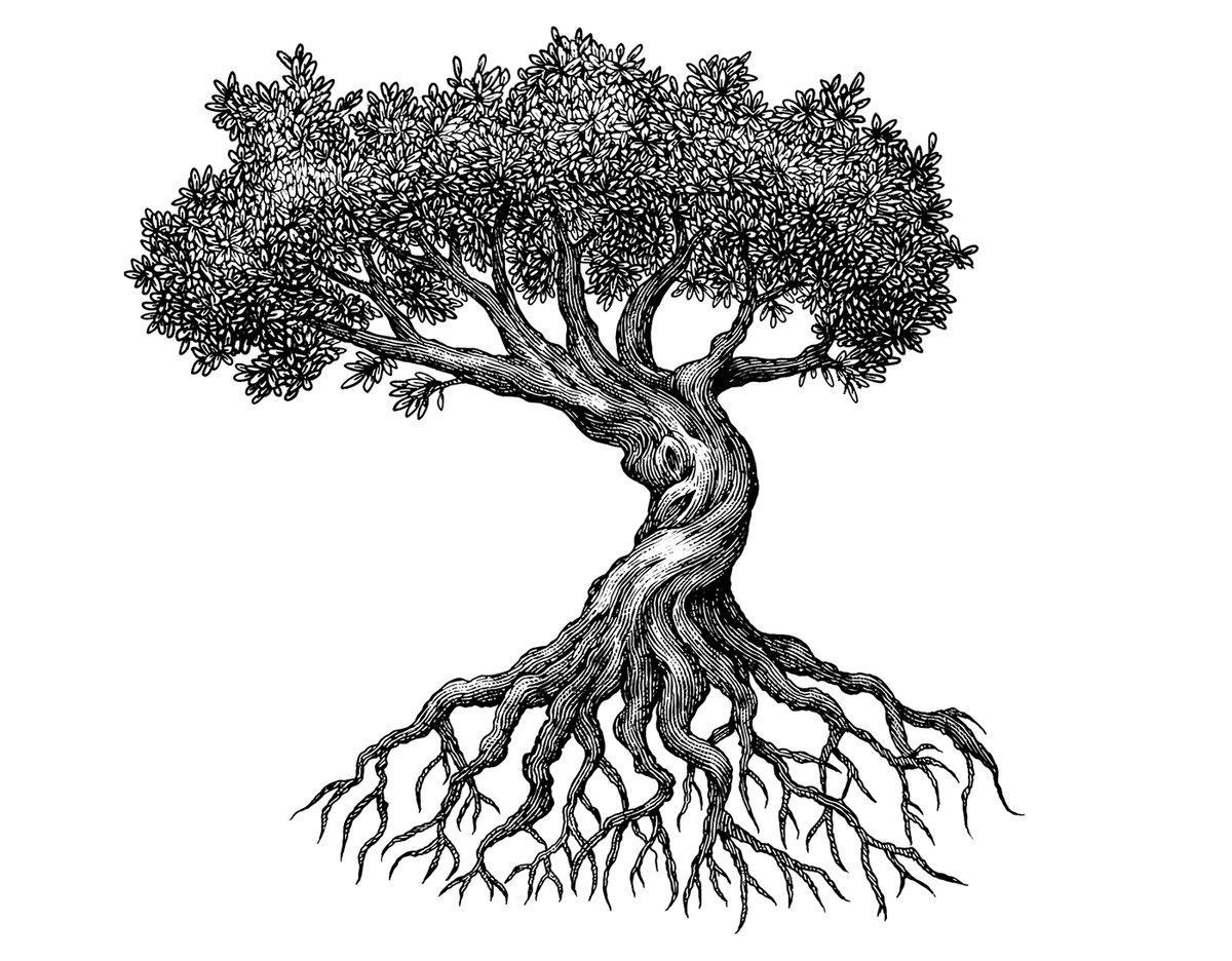 старинное дерево рисунок