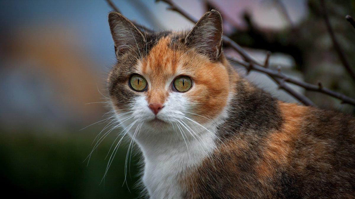 спутниковой картой разноцветные кошки фото также компоновка скиповым