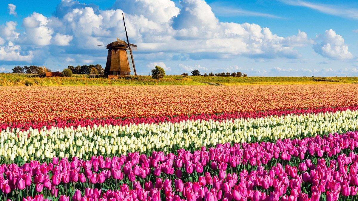 Открытки, нидерланды картинки природы