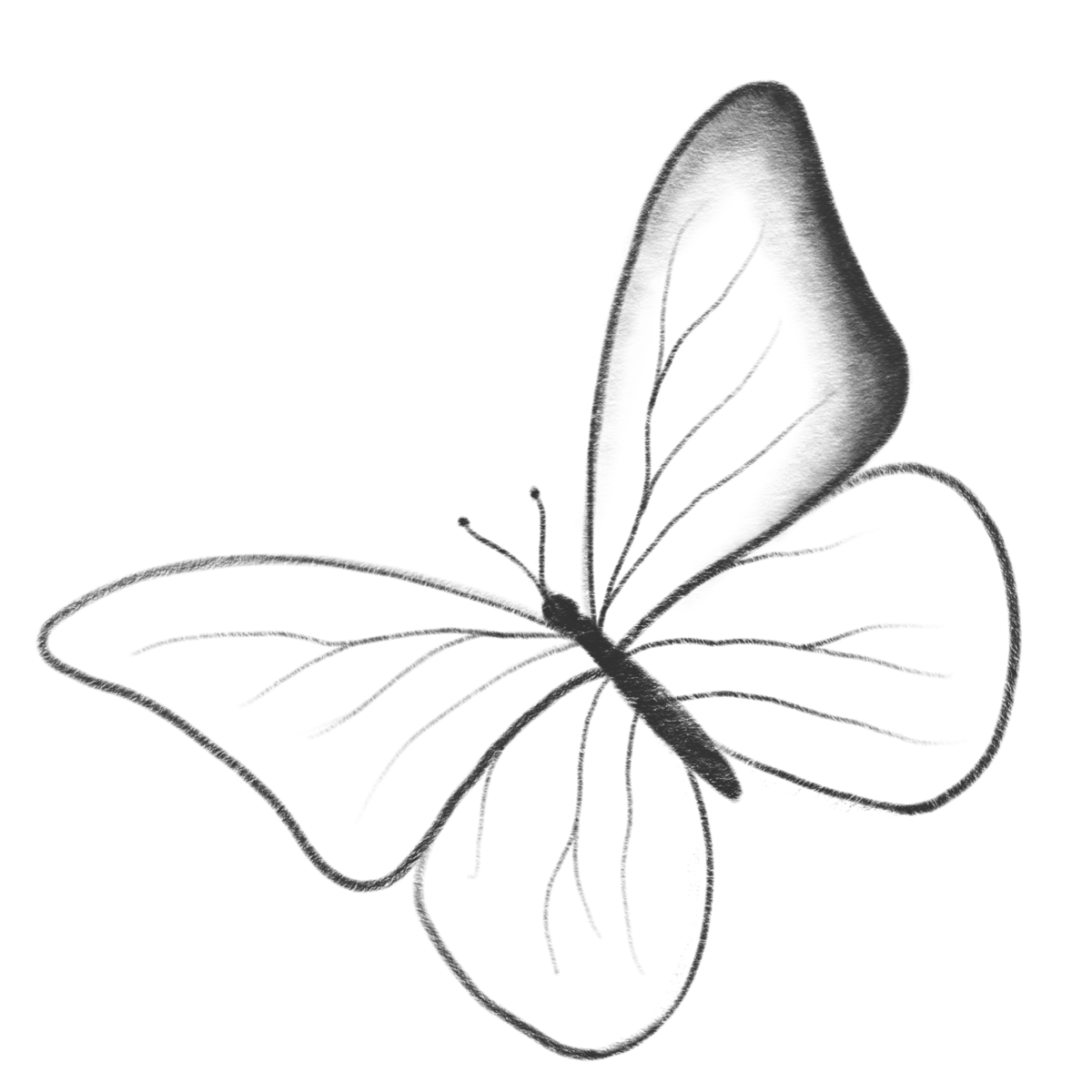 Картинка бабочки как рисовать