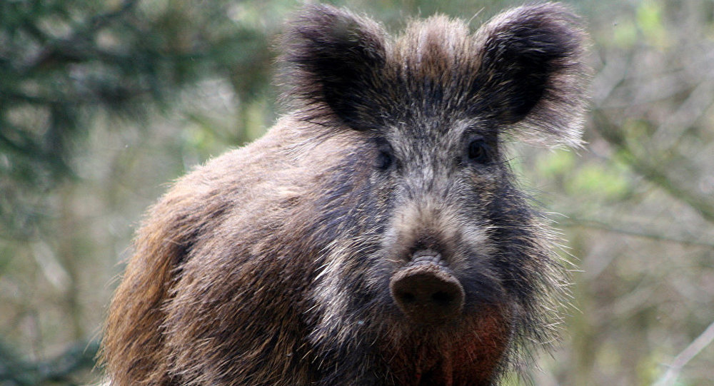 обыкновенный животные с картинками в татарстане фотограф приглашает фотосессии