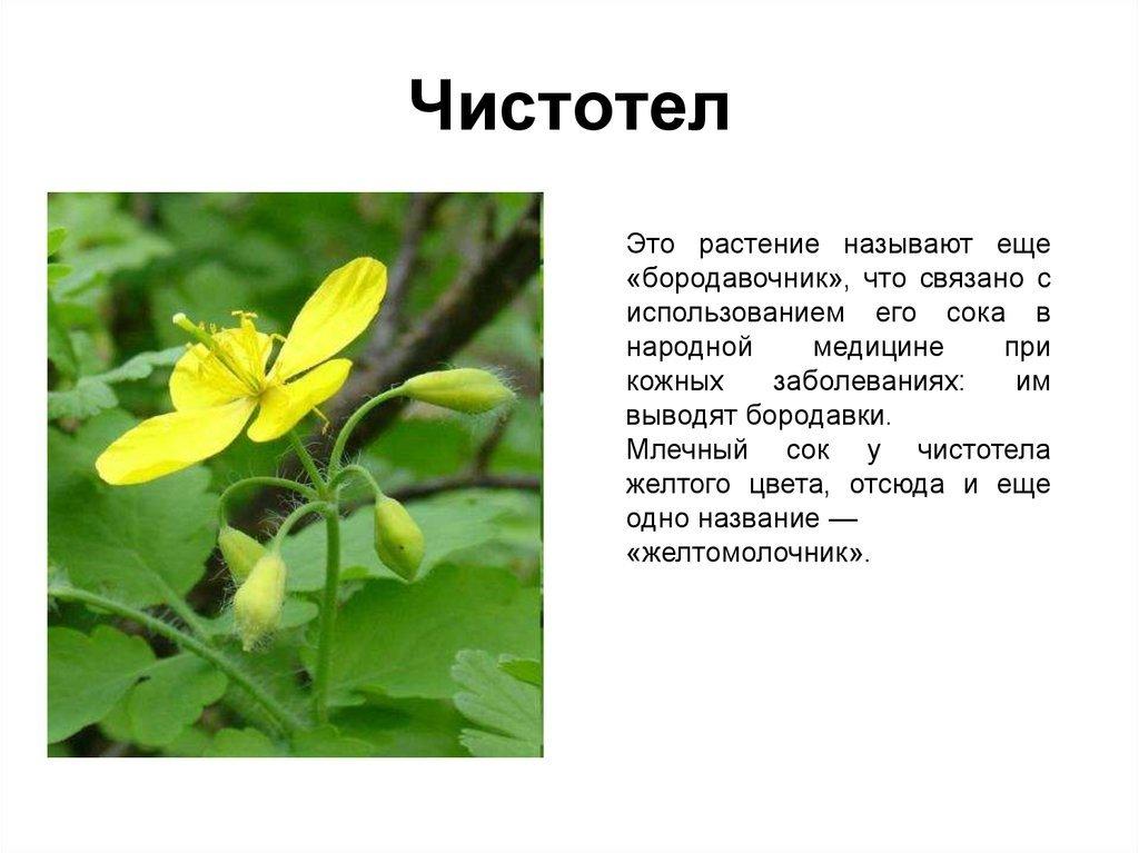 доклад о растениях картинки хочет