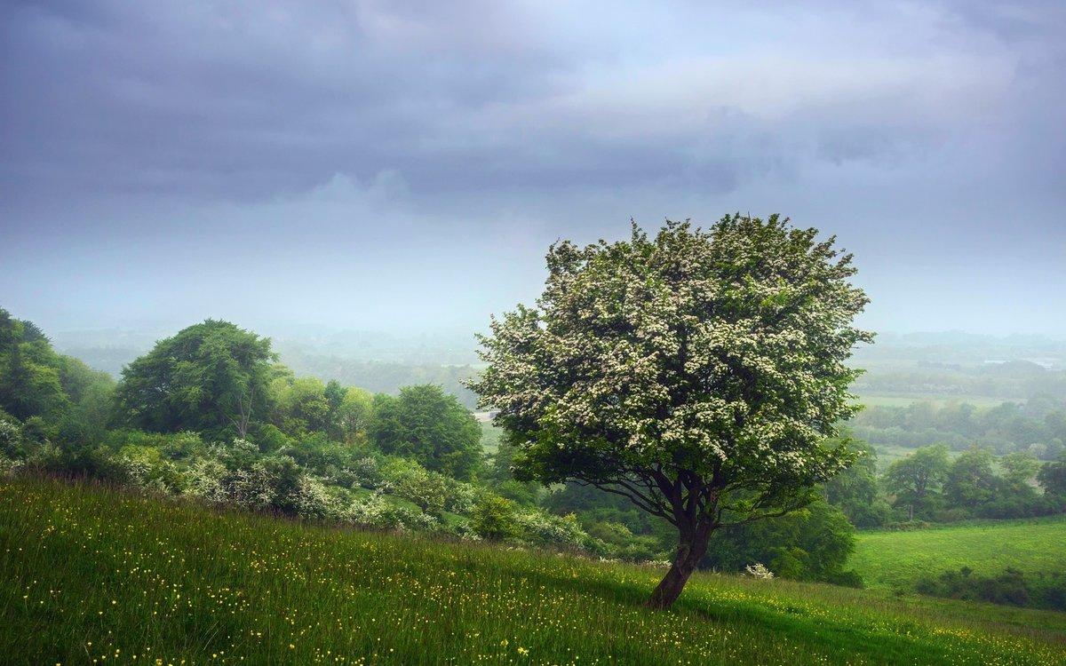 картинки дерево на холме узбекский