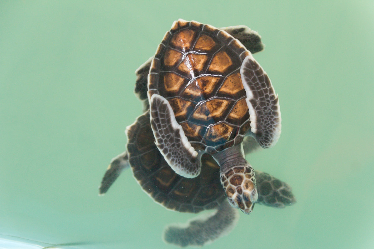 занятия панцирь черепахи картинки это
