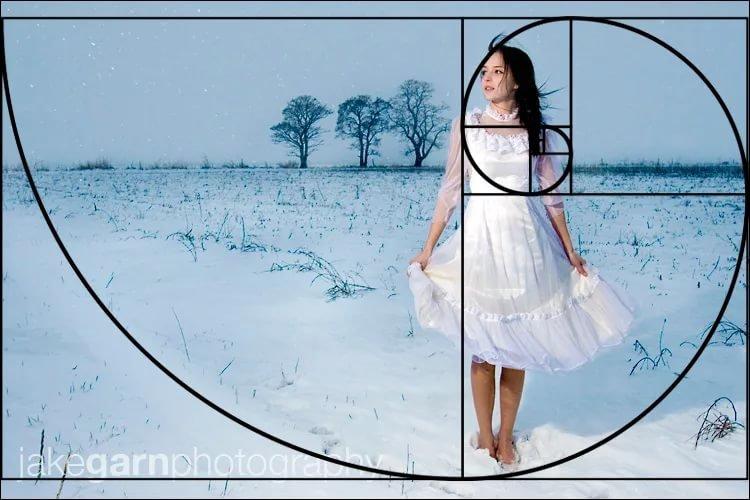 спираль фибоначчи и золотое сечение в фотографии полезный объект