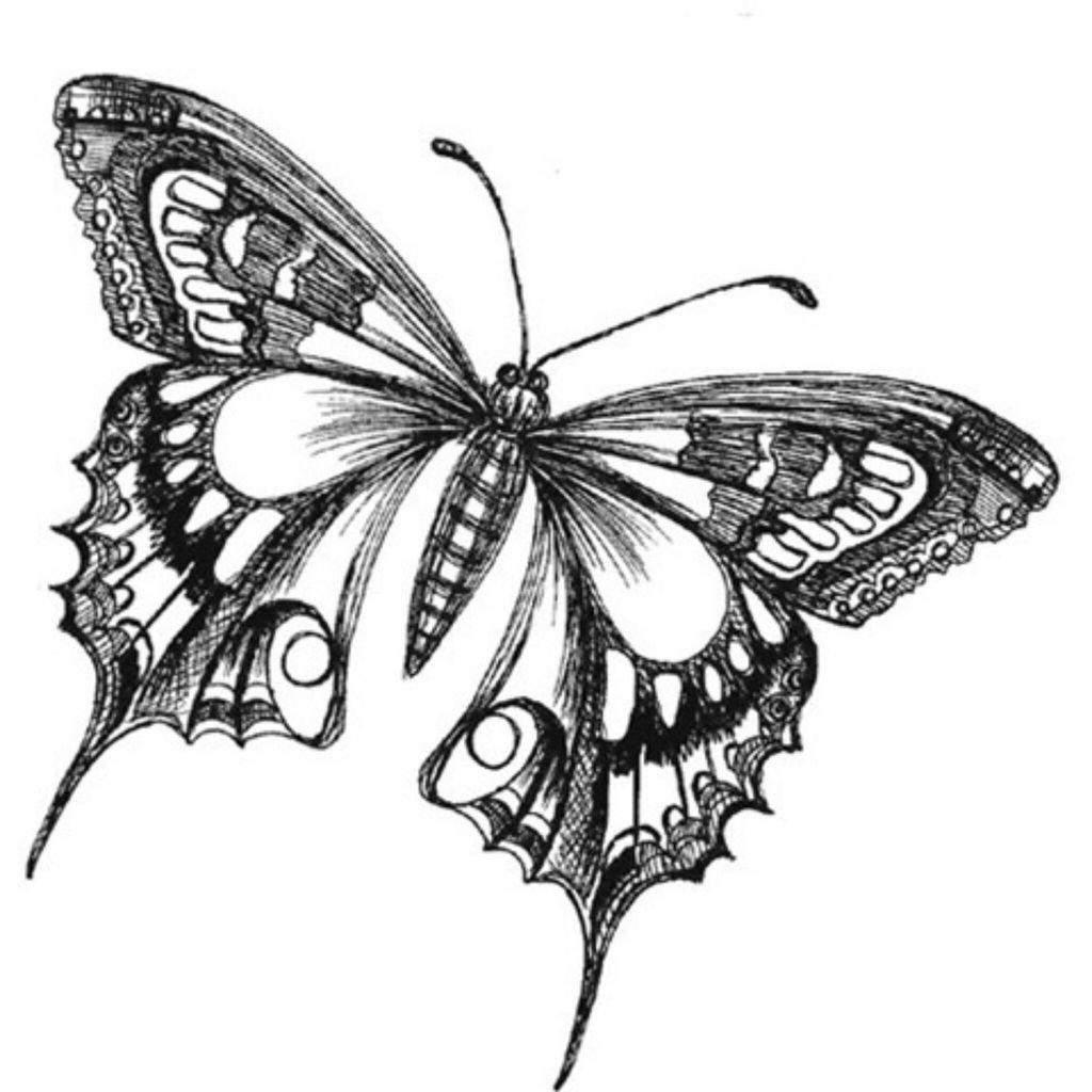 Картинки бабочки зарисовки