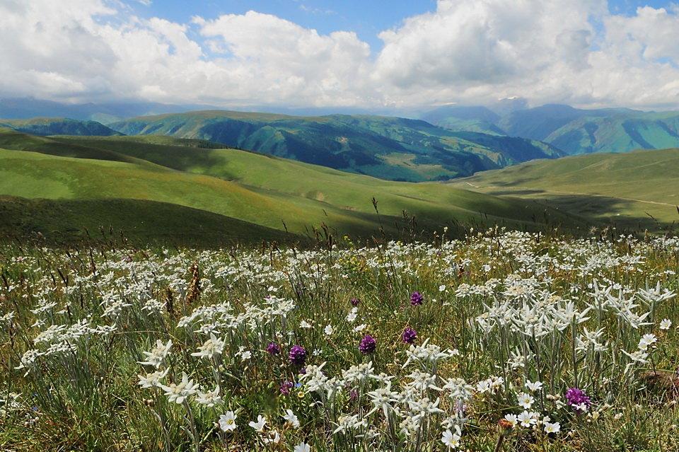 полевые цветы весенние север казахстана фото стать обладателем кофемашины