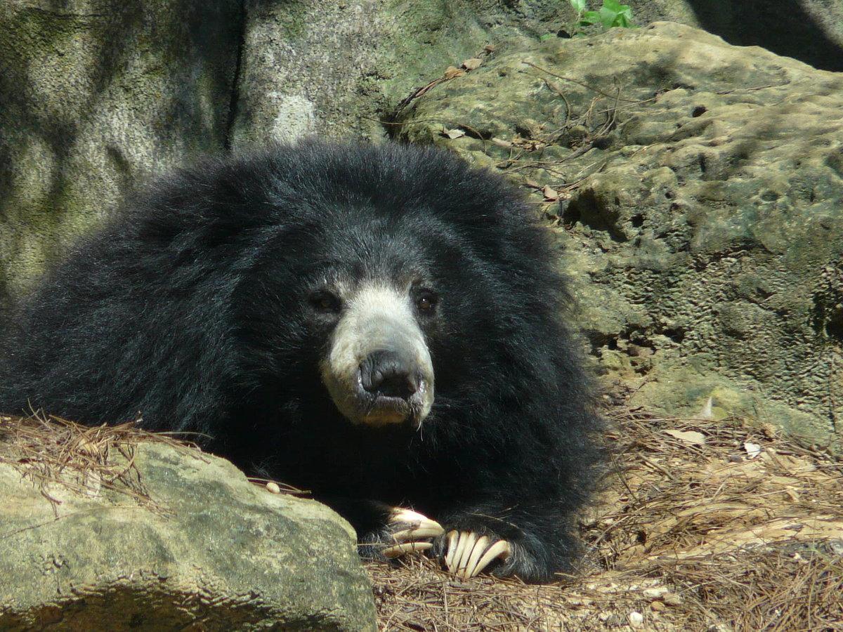 Медведи мира фото и названия