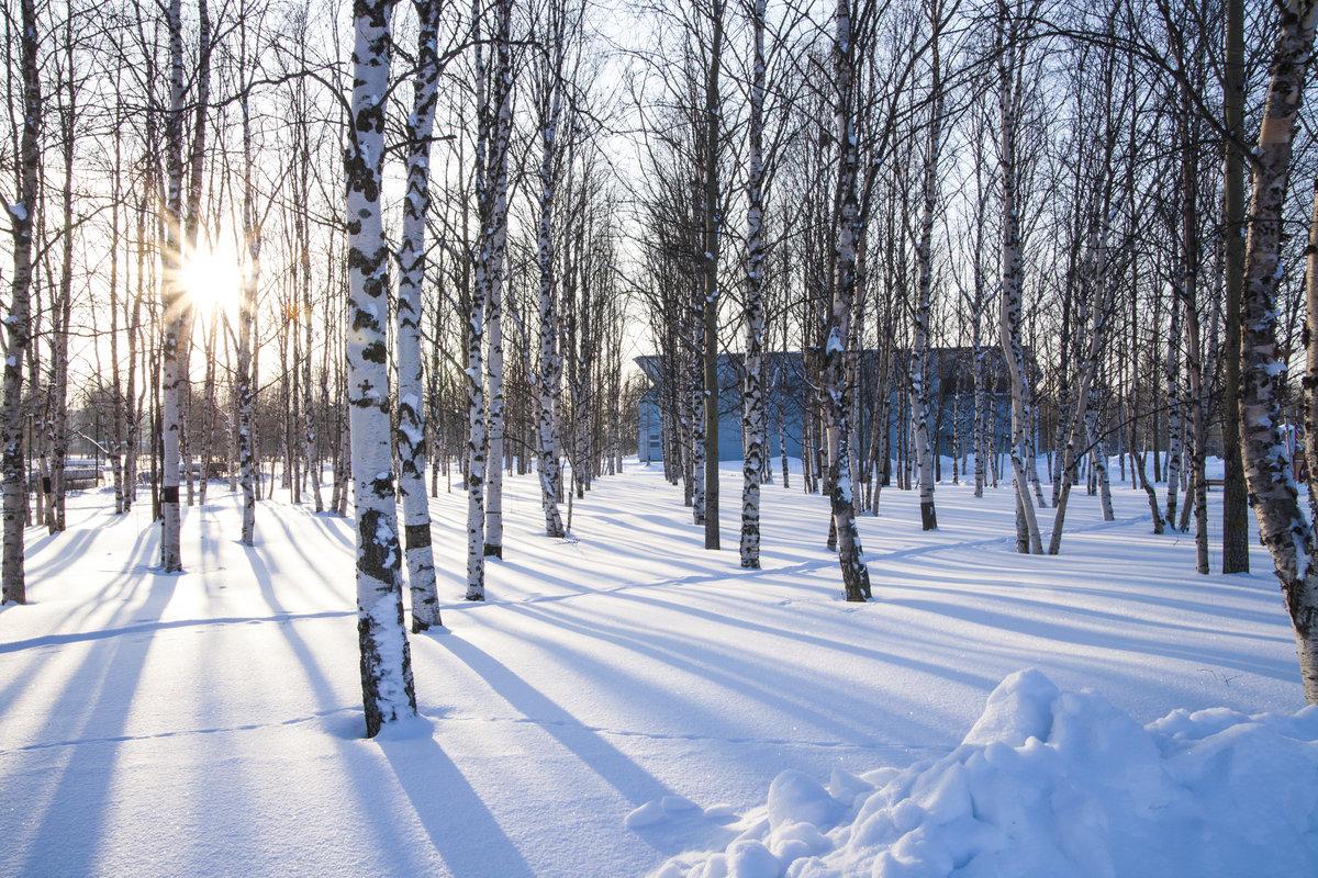 картинки зимнего парка того, делаются