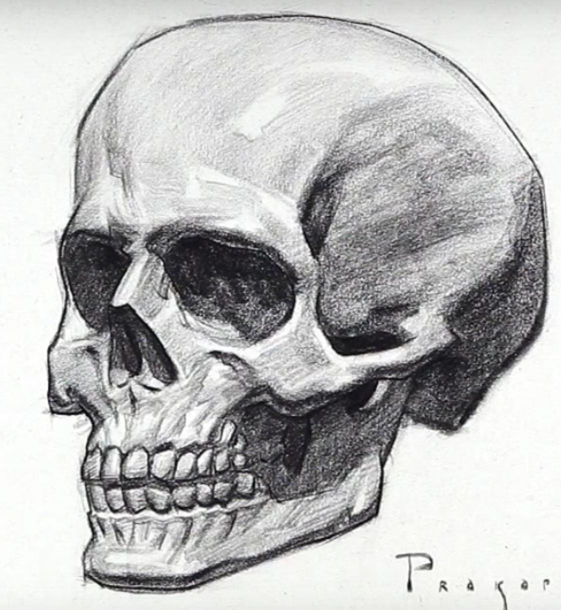 картинки черепа со всех сторон данного