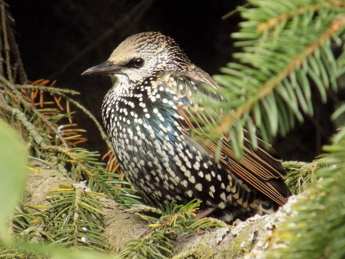 Птицы ленинградской области фото и названия летом