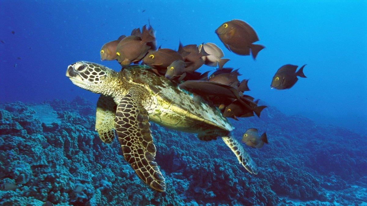 Названия и фото океанских рыб