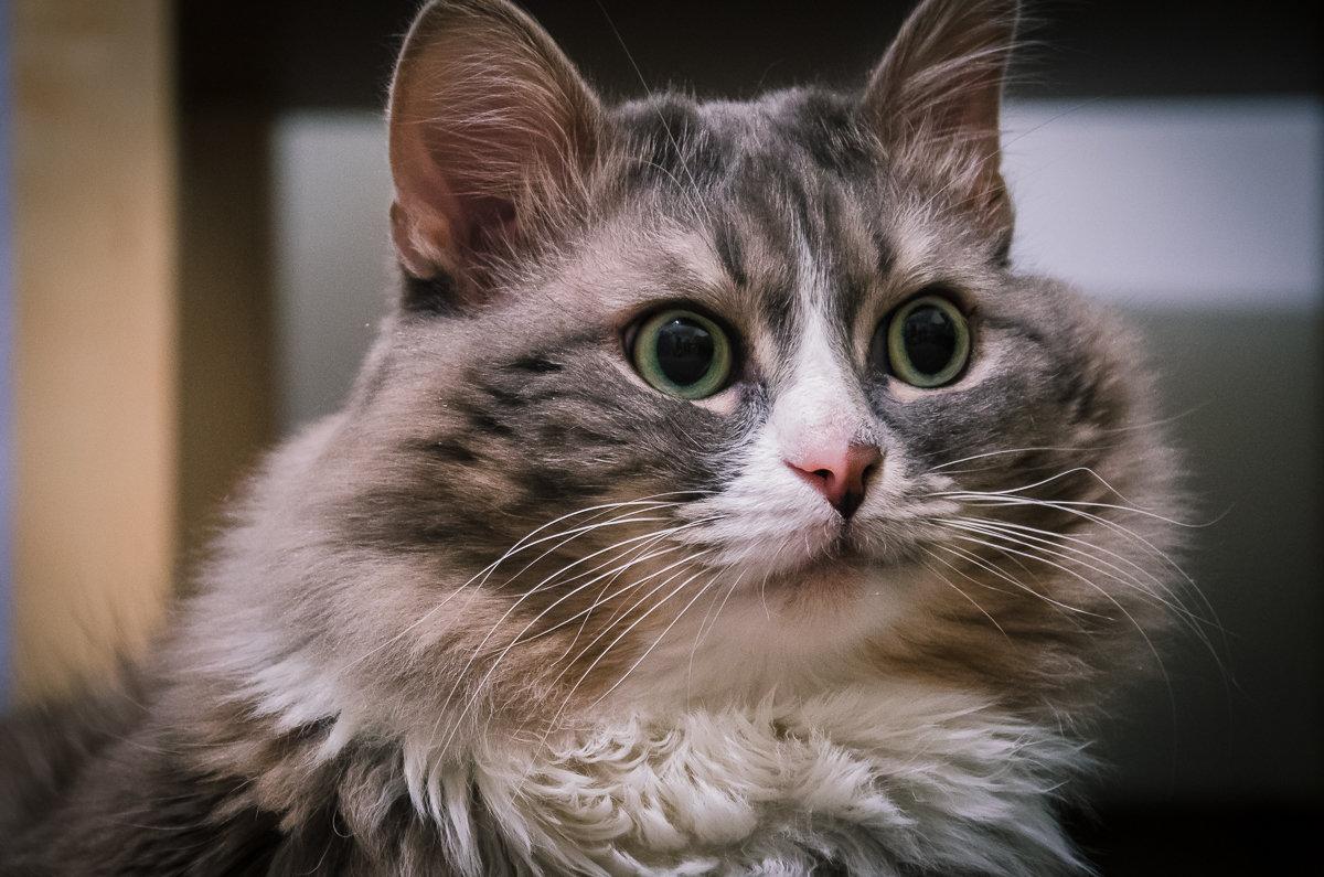 озадаченный кот картинки ней живет тимати