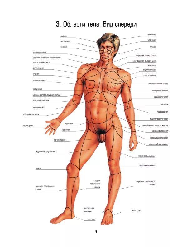 Родина россия, тело человека картинка с надписями частей тела