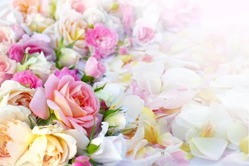 Цветы картинка на открытку, открытка текст