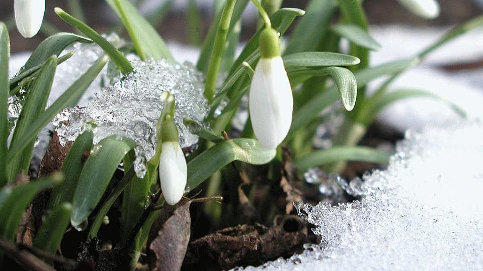 Весна открытки март
