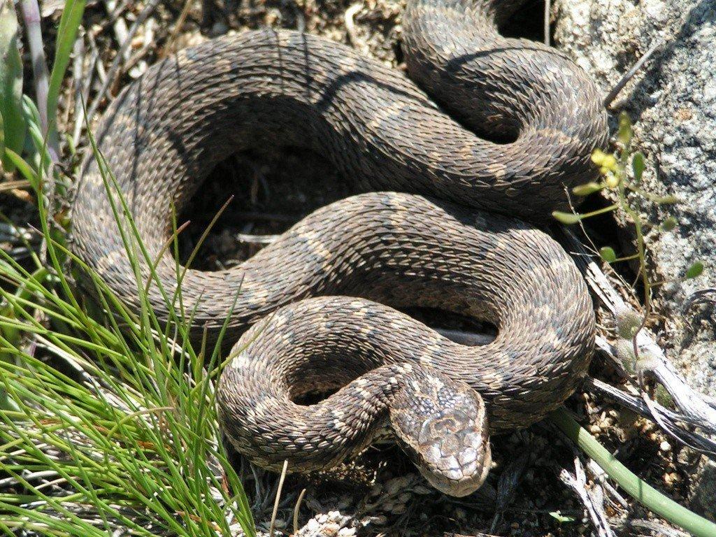 для фото змей обитающих на дальнем востоке там