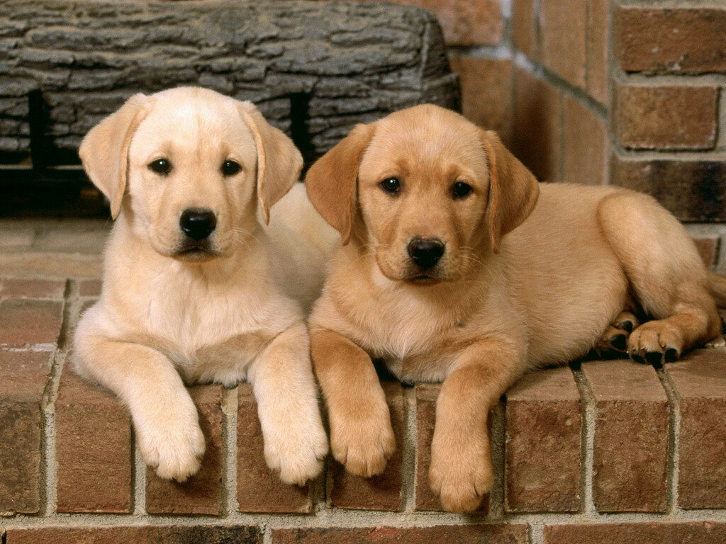 День, картинки про собак