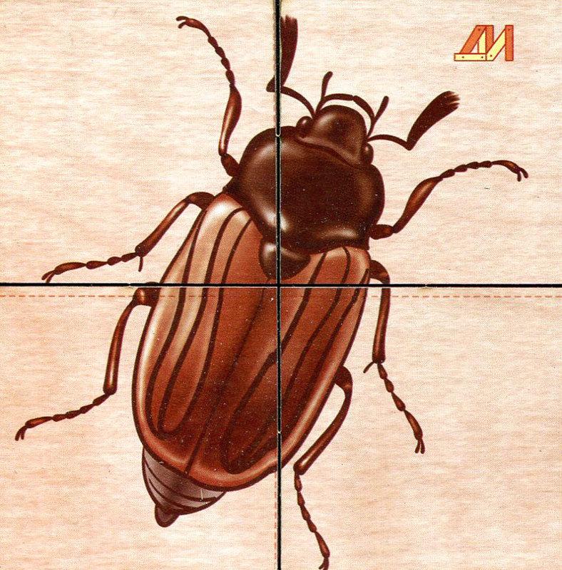Днем, сложи картинку насекомые