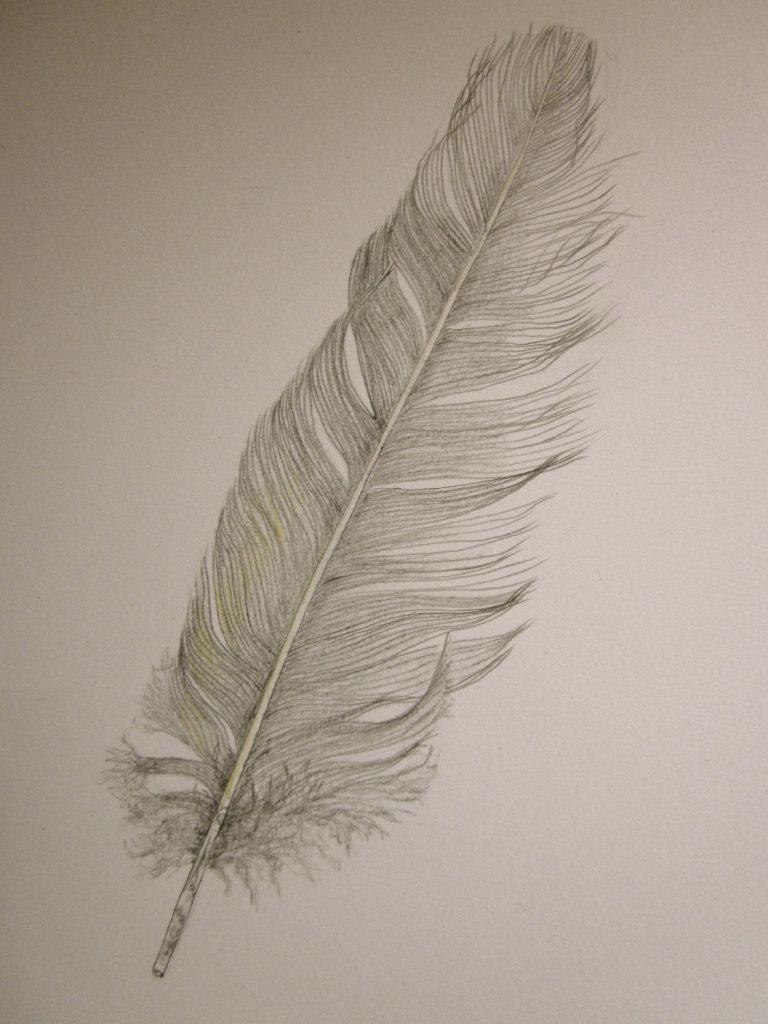 Рисунки перьев птиц карандашом