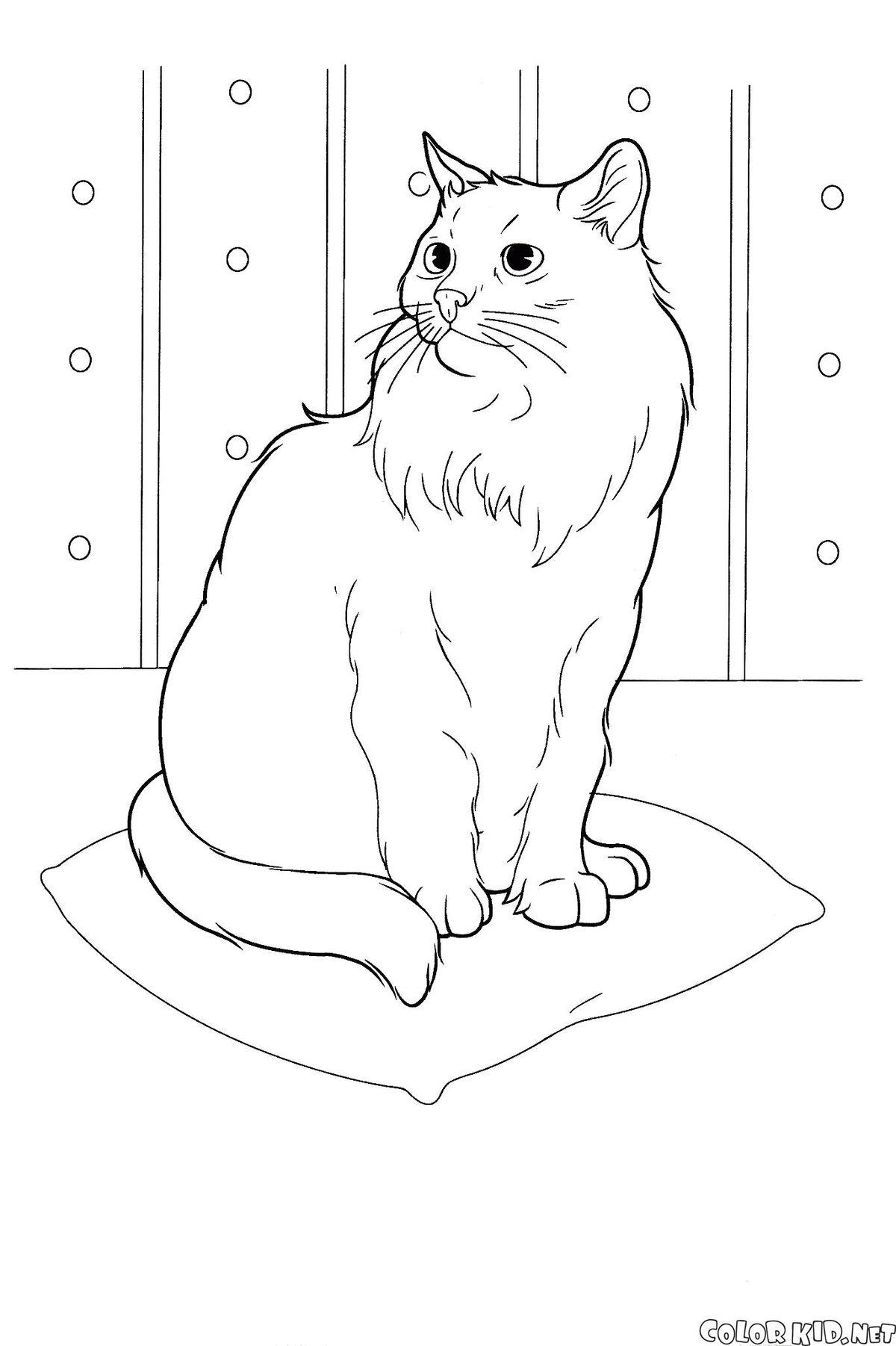 Днем рождения, черно белые картинки кошки для распечатки