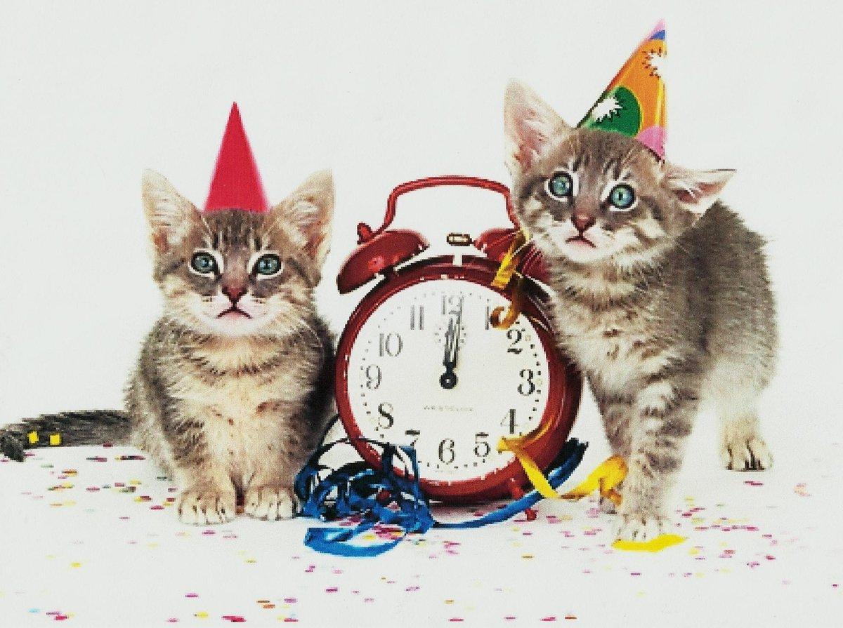 Прикольные открытки год кота, приколы