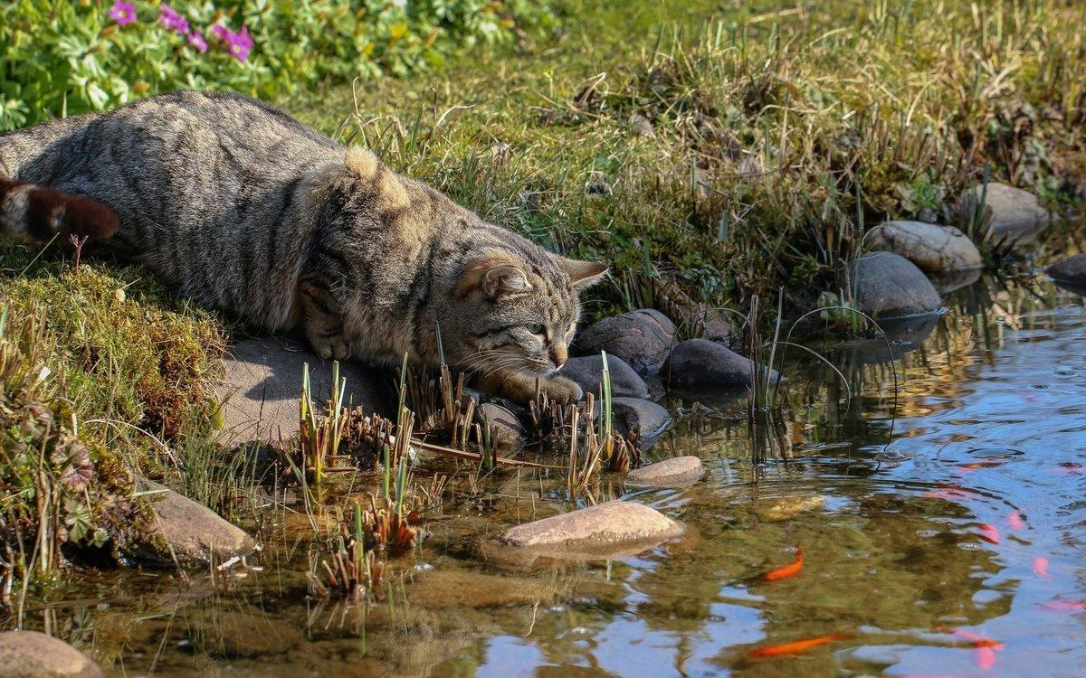 Кот рыболов прикольные картинки, открытка именами