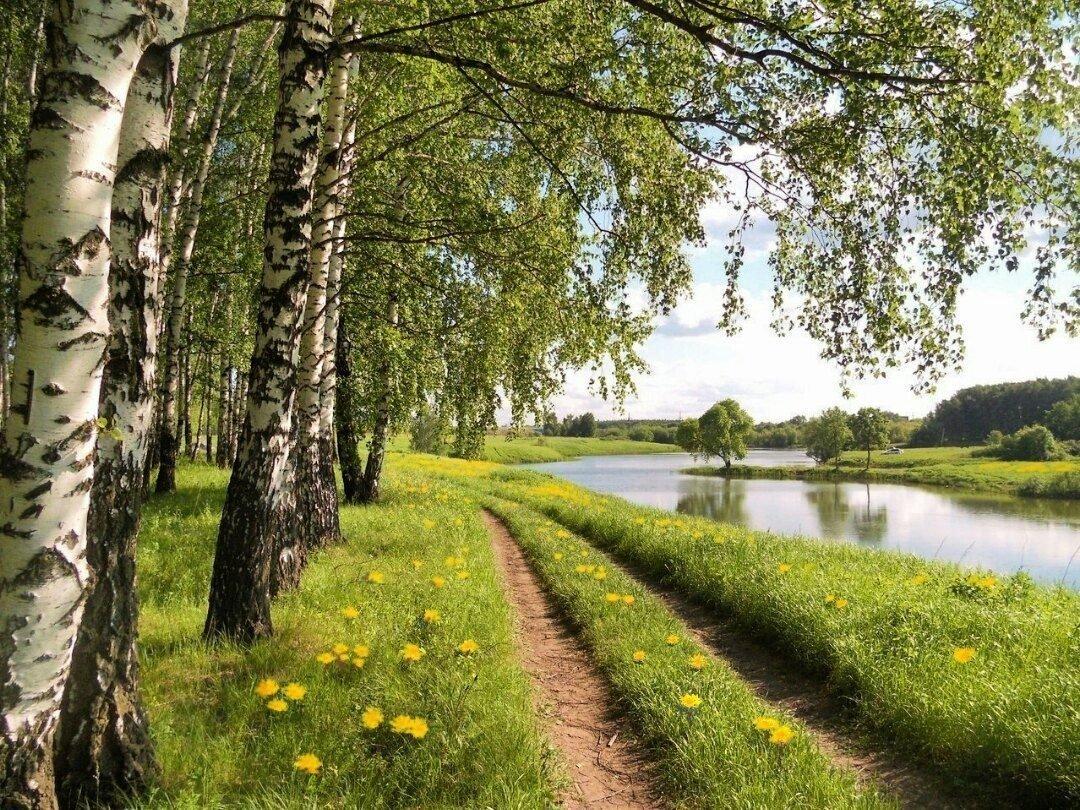 фон для фото речка лес березы ценителей классики прекрасным