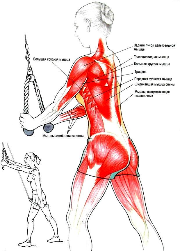 Мышцы спины как качать картинки