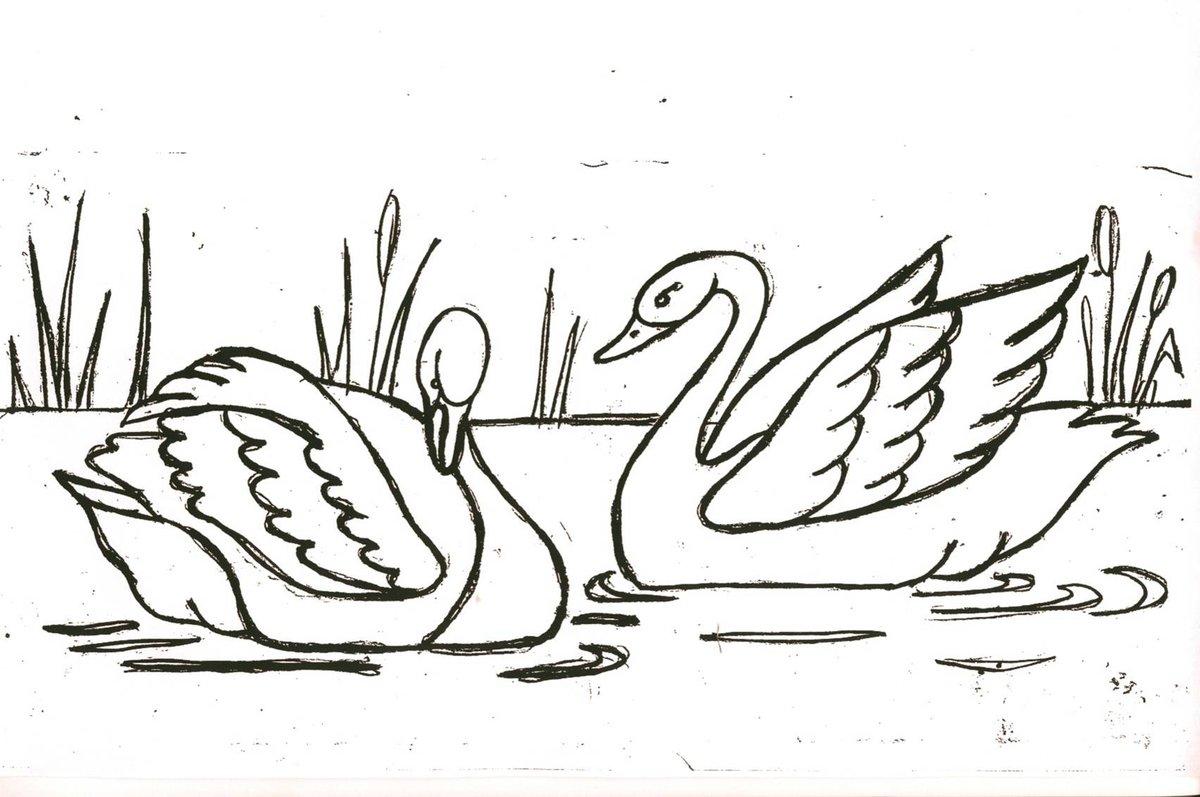 Лебеди картинки для распечатки, природу картинки кошечка