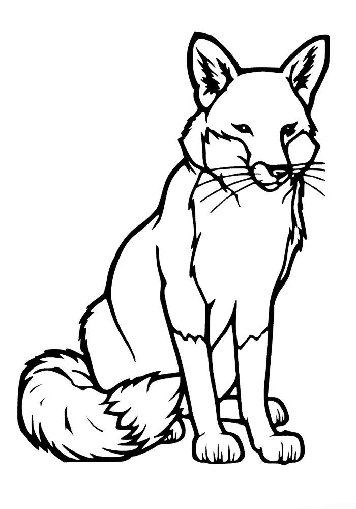 Сова, картинка черно белая лиса