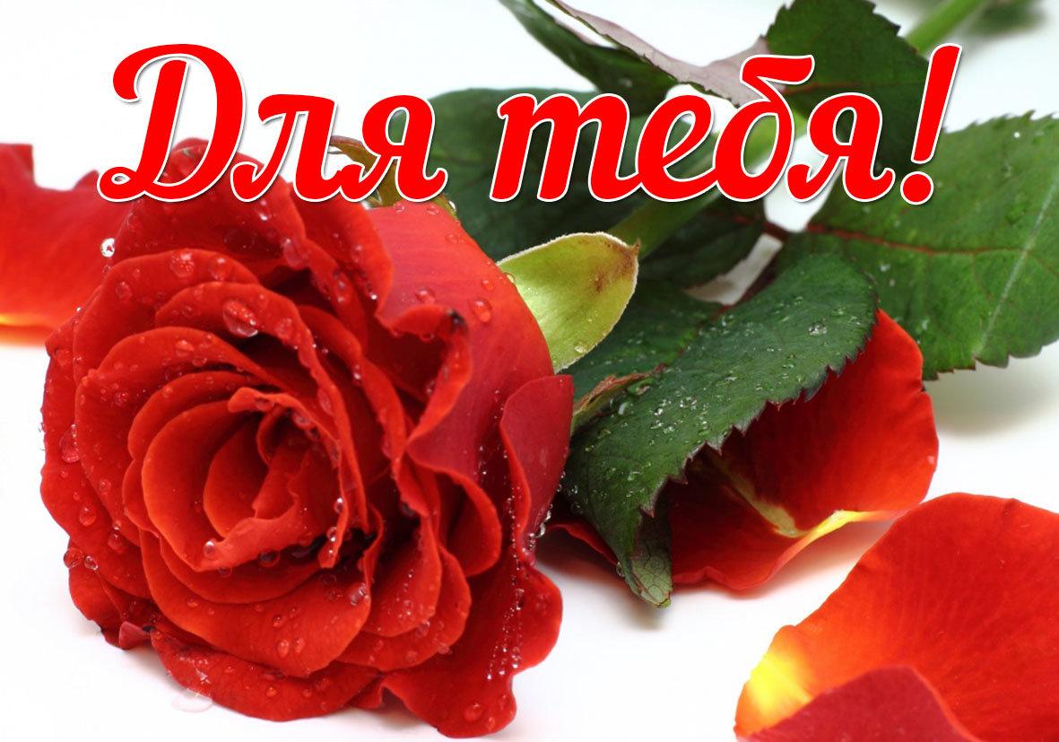 Красивые картинки с цветами для женщины с комплиментами, марта создать