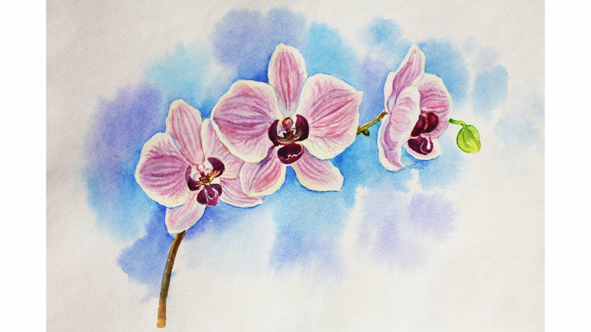 орхидеи картинки нарисовать