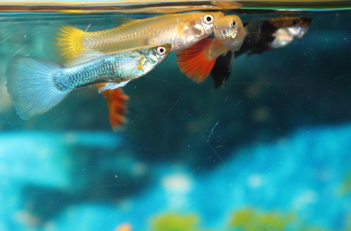 победа как фотографировать аквариумных рыб области спины
