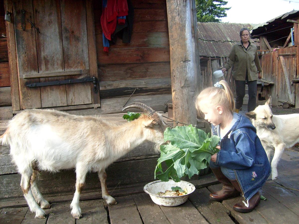 хозяйство в деревне фото