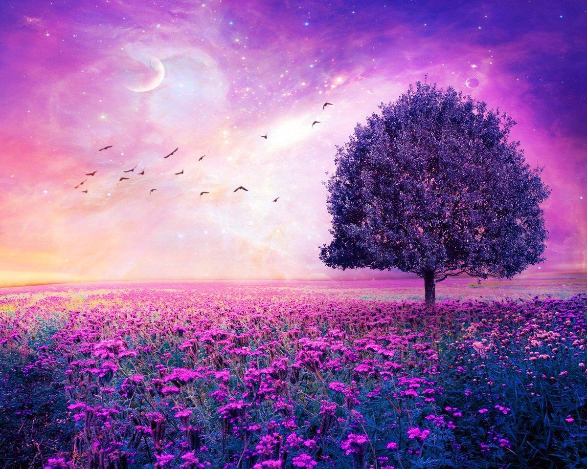 Фиолетовые картинки красивые, строгой