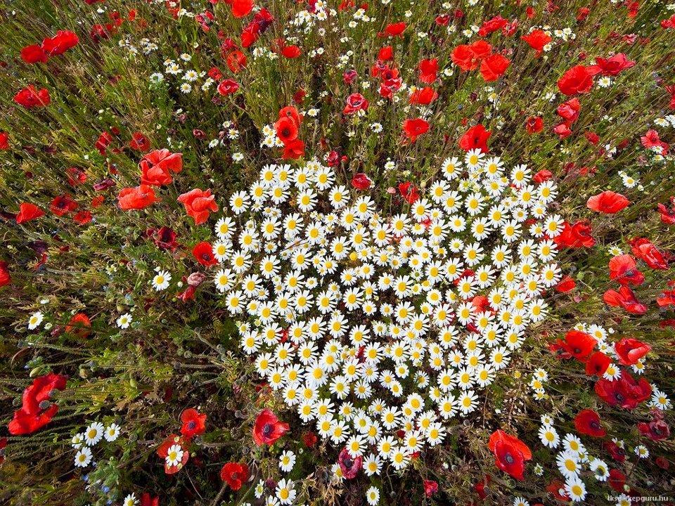 Картинки море цветов из роз