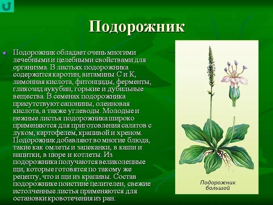 Доклад о растениях картинки