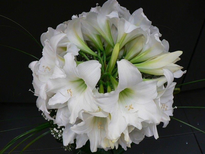 красивый букет белые лилии фото кадрах