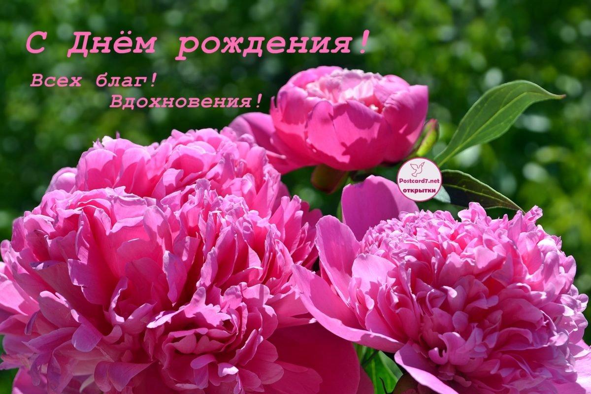 Открытка днем, картинка с днем рождения женщине цветы пионы