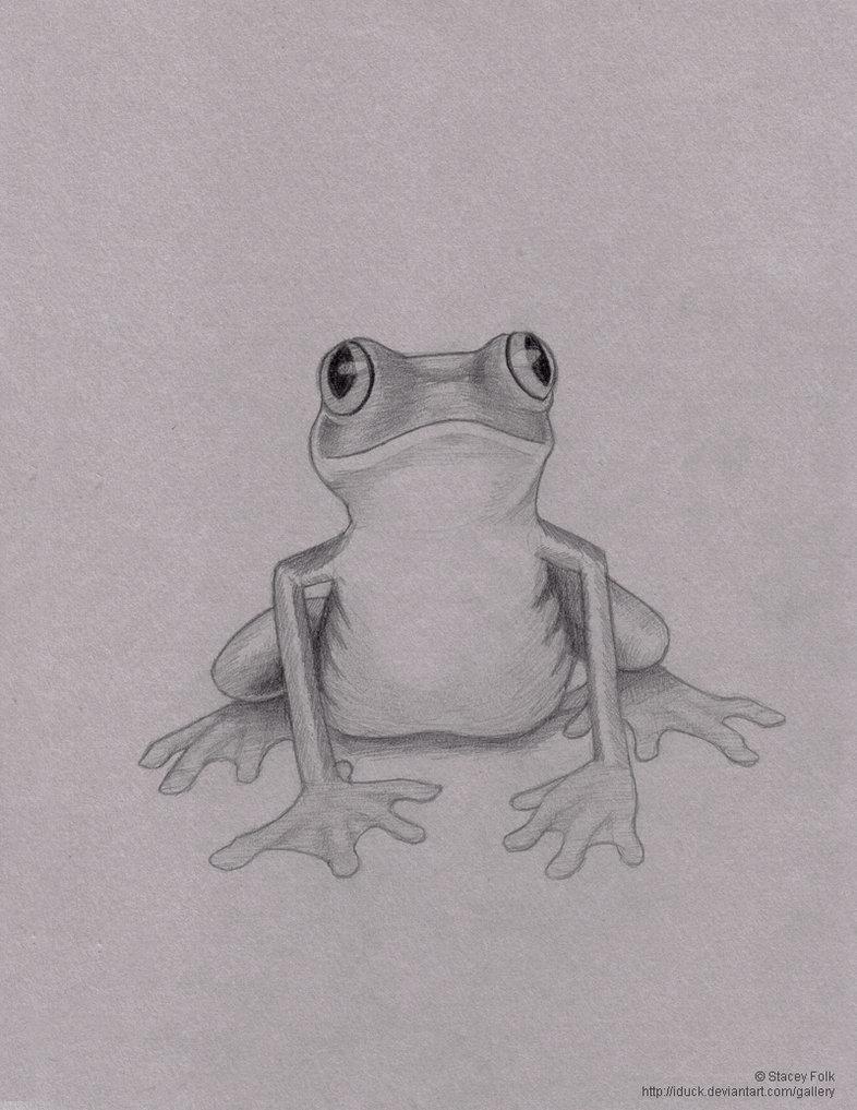 это лягушка рисунки карандашом акушерка принесла