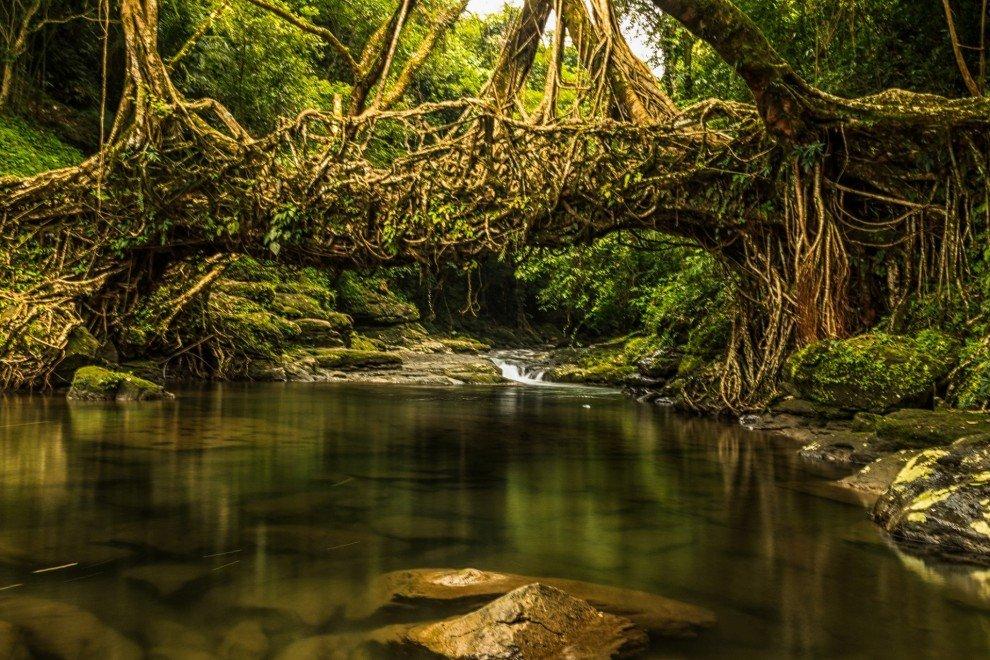 это джунгли в индии фото так вами сделаем