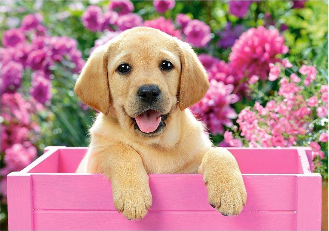 Картинки с щенятами